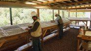 En Veracruz, Mexican Gold Corp descubrió vetas de oro